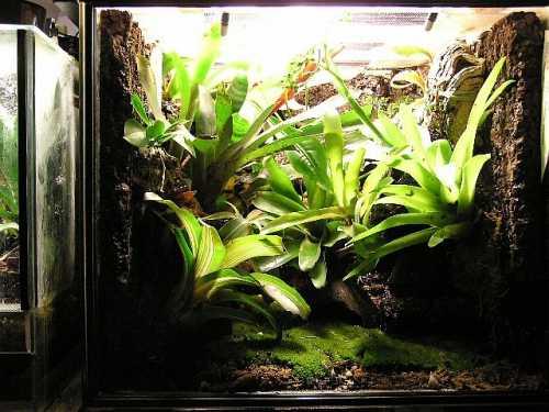 Reptarium terrarium reptile tanks for salereptile tanks for Fish antibiotics petco