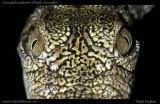 "<a href=""http://www.reptarium.cz/en/taxonomy/Crocodylus-palustris/photogallery/33189"">Photo of <em>Crocodylus palustris</em></a> by <a href=""http://www.reptarium.cz/en/profiles/5044"">Pratik Pradhan</a>"