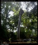 "<a href=""http://www.reptarium.cz/en/taxonomy/Naja-naja/photogallery/33195"">Photo of <em>Naja naja</em></a> by <a href=""http://www.reptarium.cz/en/profiles/5044"">Pratik Pradhan</a>"